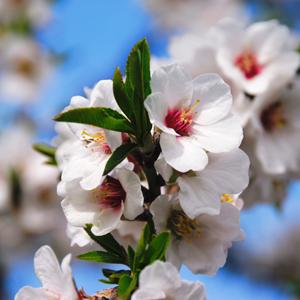 Almond Detoxifying Balance