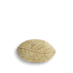 Verbena sapun u obliku lista