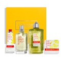 Enchanting Osmanthus Collection
