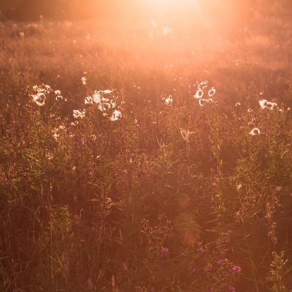 Terre de Lumière L'Occitane en Provence