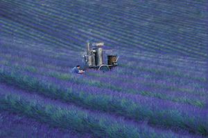 L'Occitane en Provence - Parfums