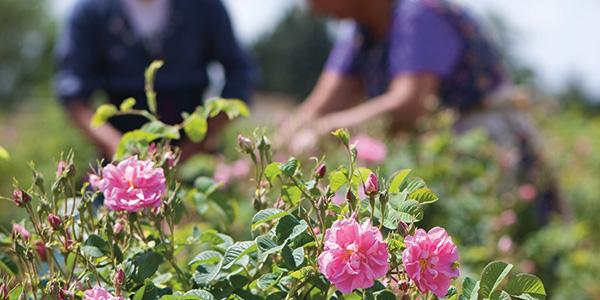 L'OCCITANE en Provence : un approvisionnement durable