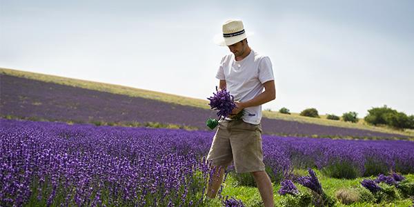 Lavender producer