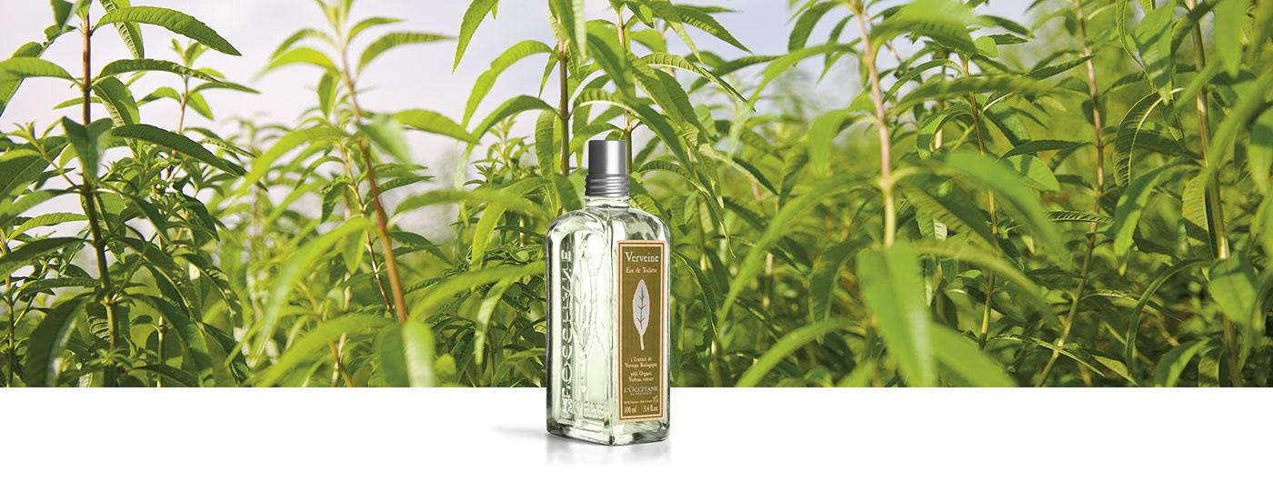 PERFUMY - Verbena - l'Occitane