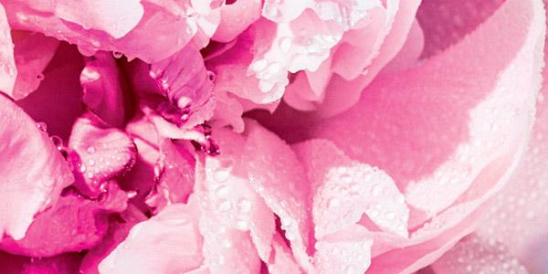 Skin brightening - Reine blanche routine - l'Occitane
