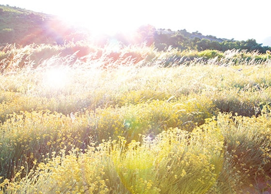Celebrate the beauty of Nature!  - L'Occitane