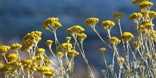 植物のエキスやオイルで、乾ききる前の保湿ケアを
