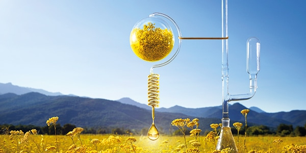 ABOUT US - L'OCCITANE, A JOURNEY THAT STARTS IN PROVENCE - l'Occitane