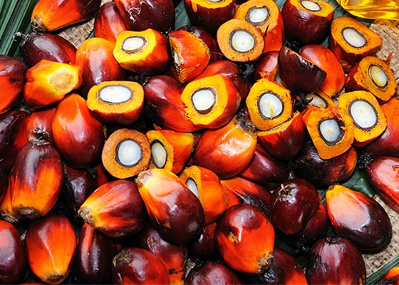 Sustainable palm oil - SUPPLY CHAIN - L'Occitane