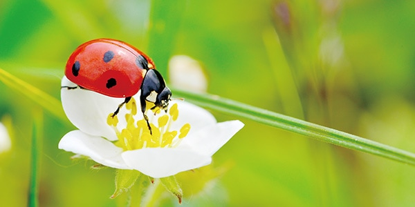 春の訪れを告げる、幸運のシンボルとは?
