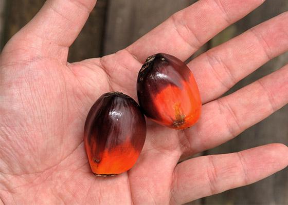 kestävän kehityksen palmuöljy - AINESOSAT - l'Ocitane