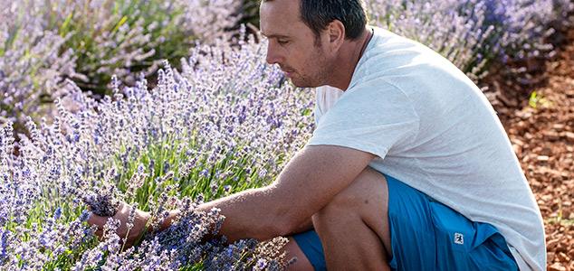 Lavendel Produzent