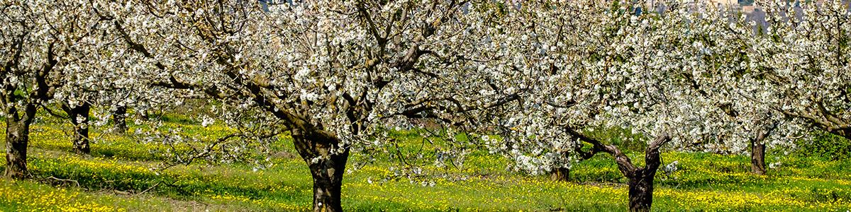 春の兆しを愛でながら、ゆらぎ肌のケアを