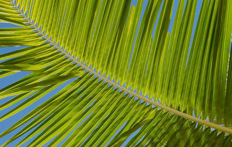 Palm Oli Statement -L'OCCITANE