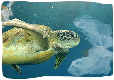 plastic: gevaar voor de oceanen