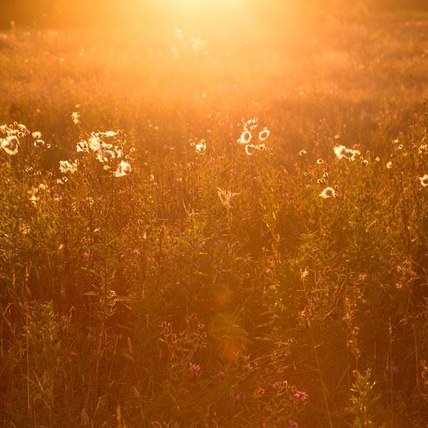 terre de lumiere ecuador tierra de luz