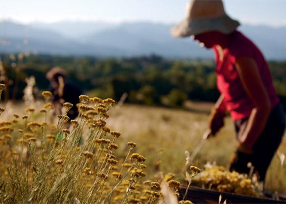 Divine krém - Pohľad do zákulisia - L'occitane