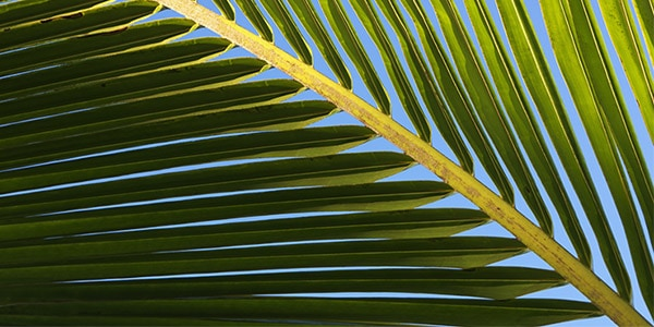 L'OCCITANE IS INVOLVED FOR A SUSTAINABLE PALM OIL - l'Occitane