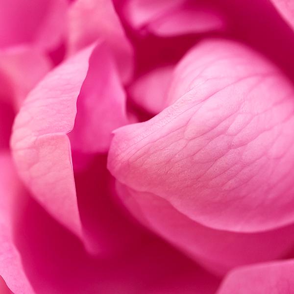 trandafiri - l'occitane