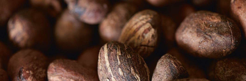 Manteca de Karité: propiedades para la piel | L'OCCITANE
