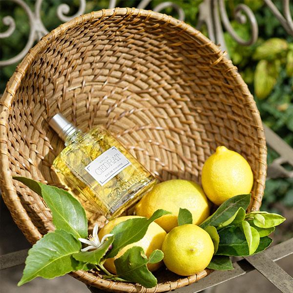 Cedrat Fragrance