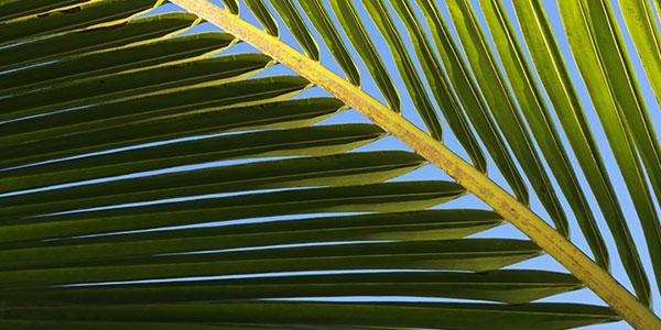 Palm Oil Statement