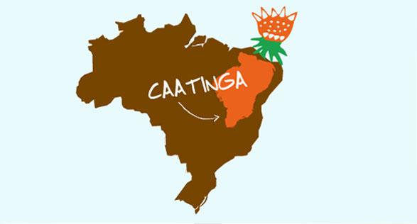 Caatinga Landscape Image
