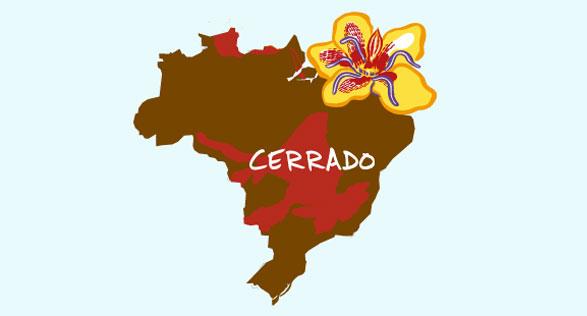 Cerrado Landscape Image