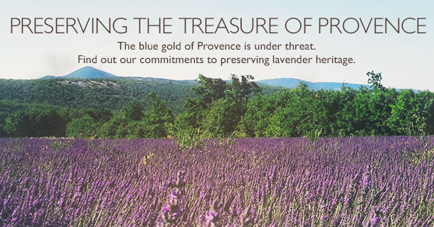 L'Occitane Lavender Project