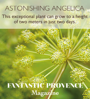 Astonishing Angelica