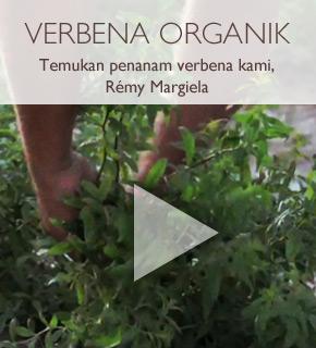 Verbena Organik. Temukan penanam verbena kami, Remy Margiela