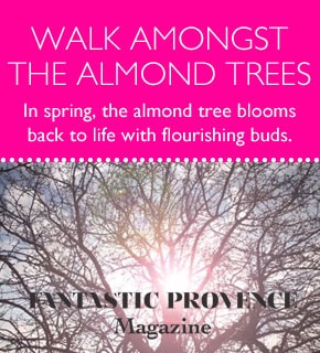 walk amongst the almond trees article