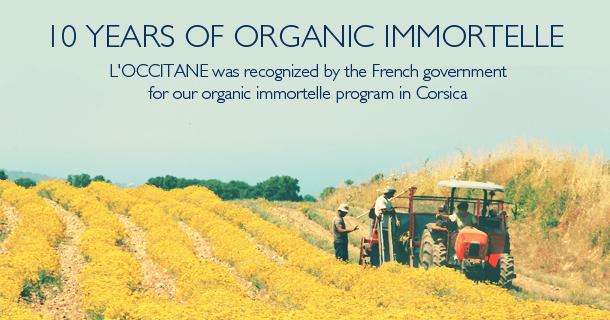 Ten years already for the Immortelle Flower Planting Program