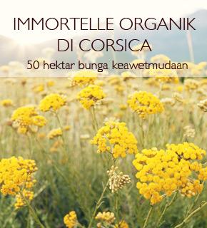 Immortelle Organik di Corsica. 50 hektar bunga keawetmudaan.