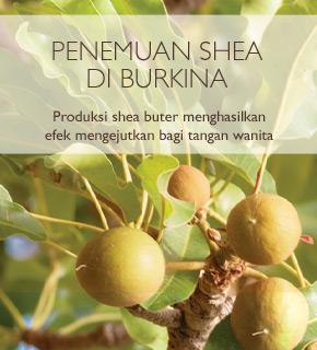 PENEMUAN SHEA DI BURKINA. Produksi shea butter menghasilkan efek mengejutkan bagi tangan wanita