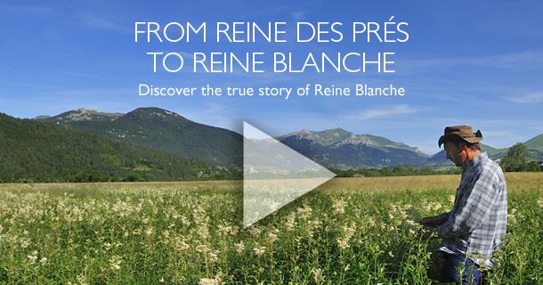 FROM REINE DES PRES TO REINE BLANCHE