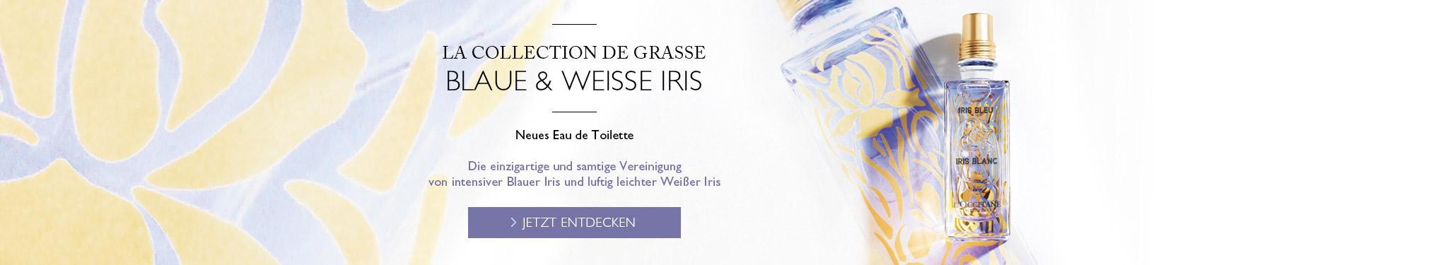 blaue weisse iris