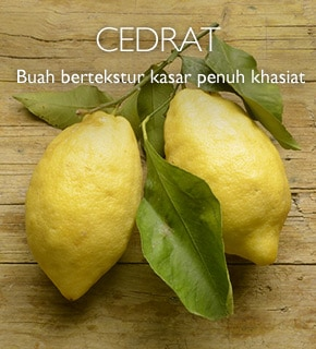 Cedrat, buah bertekstur kasar penuh khasiat