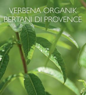 Bertani Verbena Organik di Provence