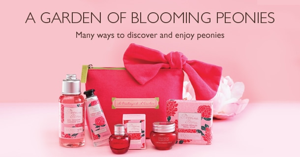 A Garden of blooming peonies