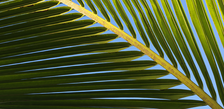 palm oil header
