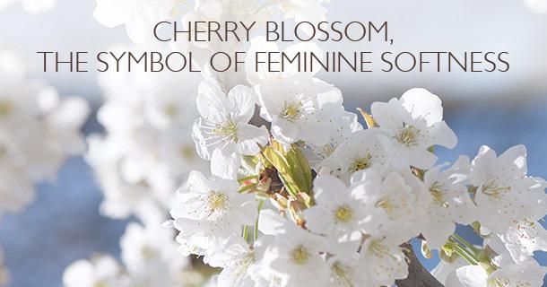 Cherry blossom, the symbol of feminine softness