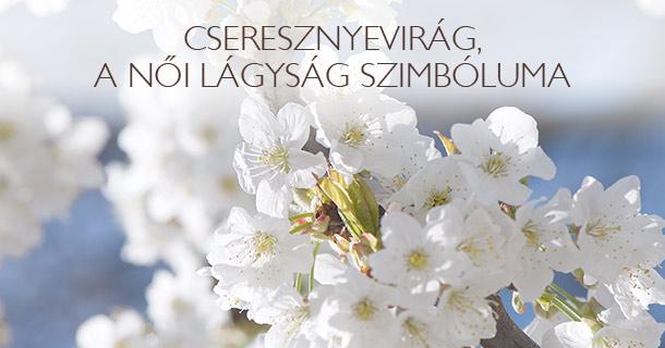 Cseresznyevirág, a női lágyság szimbóluma