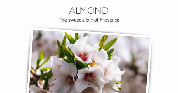 ALMOND_Collection