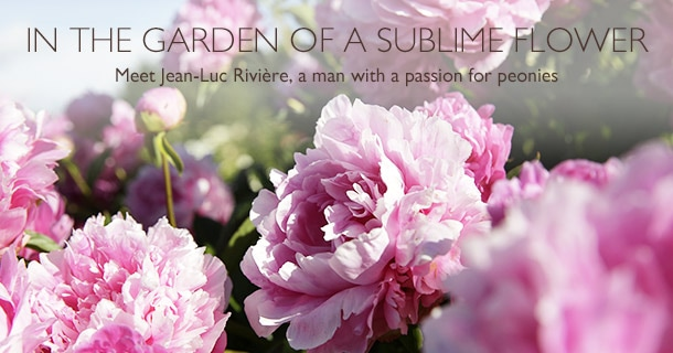In The Garden of a Sublime Flower