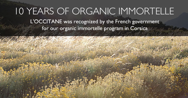 10 years of organic Immortelle