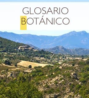 Glosario Botánico de ingredientes utilizados en los productos L'OCCITANE