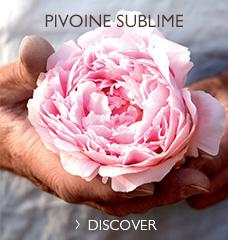 PIVOINE SUBLIME >