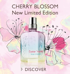 CHERRY BLOSSOM New Limited Edition >