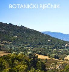 Botanički rječnik